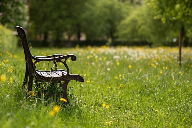 정원에서 나무 벤치와 여름 배경
