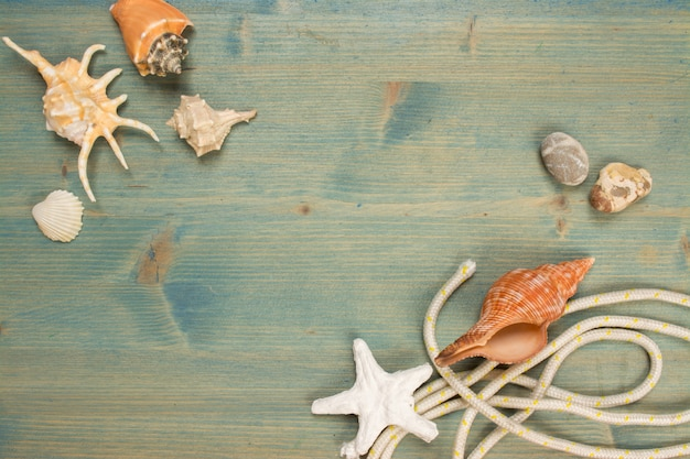 Summer background on wood with seashell and rope, copy space