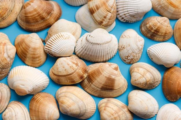 夏のビーチの背景、水色の背景に貝殻