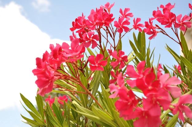 Лето beatiful цветы розового цвета