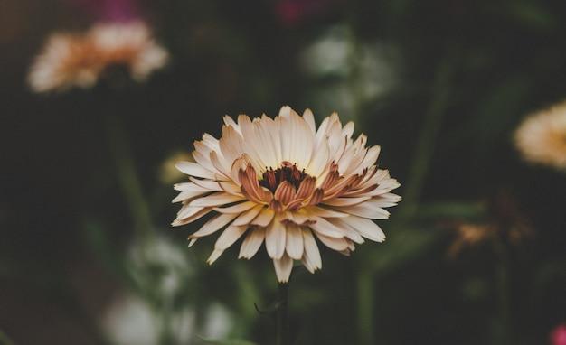 Летнее цветение, теплые тона и красивые цветы