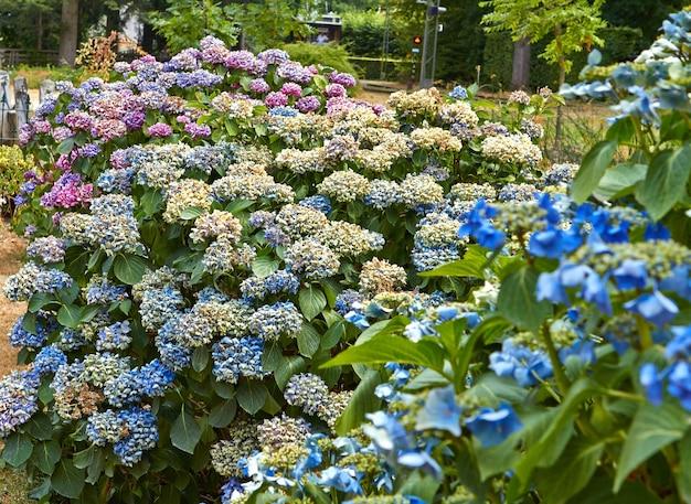 Летние цветущие цветы в арнеме. нидерланды июль 2018