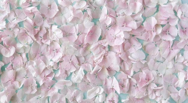 여름 꽃이 만발한 섬세한 파스텔 핑크 수 국 꽃 꽃잎, 축제 배경, 파스텔 및 부드러운 꽃 카드. 평면도, 평평한 바닥