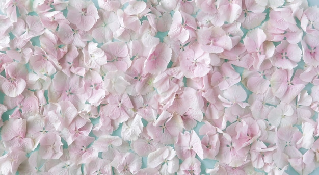 Summer blossoming delicate pastel pink hydrangea flowers petals, festive background, pastel and soft floral card. top view, flat lay