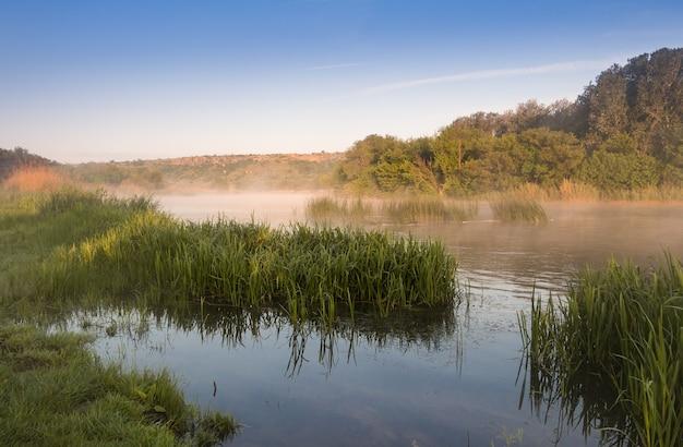여름. 잔잔한 강 해안. 강변 잔디. 아침 안개