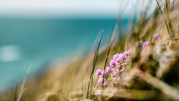 デンマークの夏の海岸線