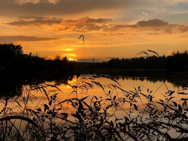 Летний красочный закат на озере с облаками, отраженными в воде и силуэтах травы на переднем плане