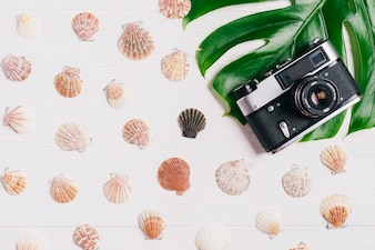 Summer composition with camera and shells