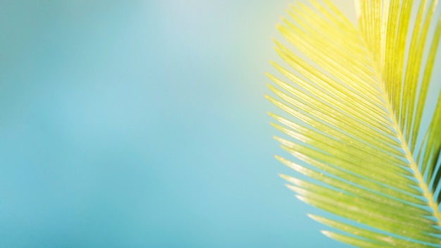 Summer composition with palm leave and copy space