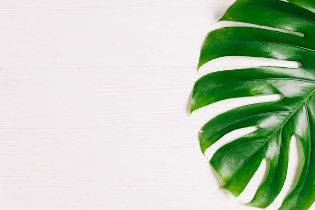 Summer composition with palm tree leaf