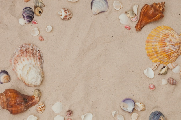Summer composition with seashell frame