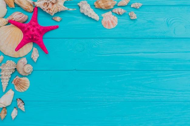 貝殻と紫色のヒトデの夏の組成