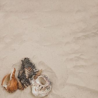 Composizione estate con conchiglie e sabbia