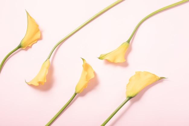 夏のコンセプト。ボーダー配置の背景。フラットレイ、上面図。ピンクの背景に黄色い花、平らな横たわっていた