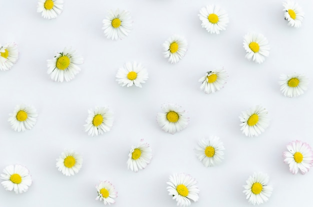 Summer concept chamomile flowers texture on white background in flat lay, top view