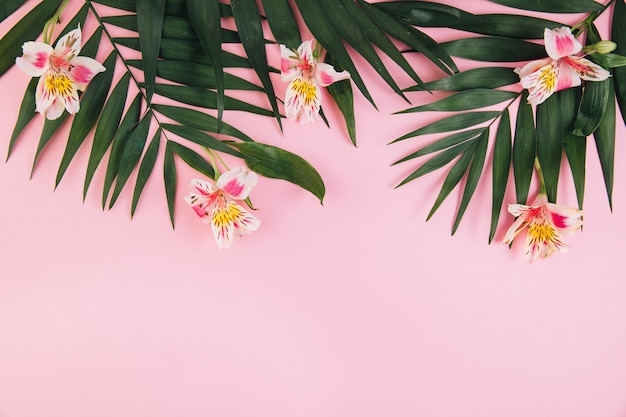 Summer concept. flowers astroemeria and palm leaves on a pink background