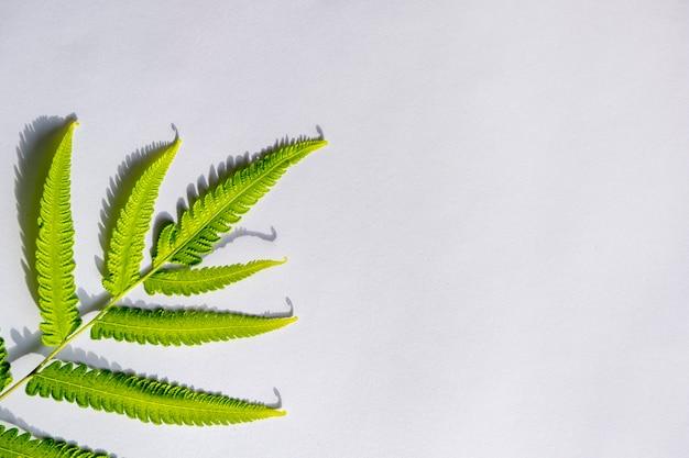夏のコンセプト。緑のシダの影と白い背景の葉。