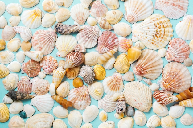 青い背景に貝殻とヒトデの夏のコンセプト。上面図。
