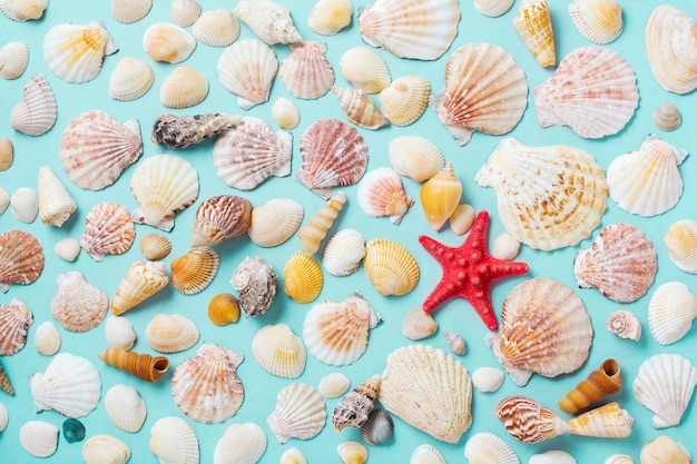 Summer concept with sea shells and starfish on a blue background. top view.