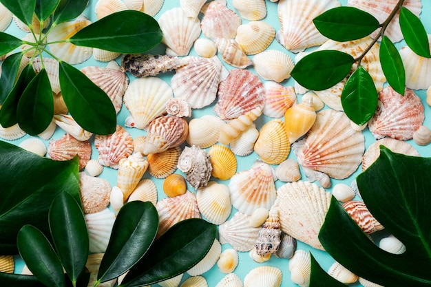 Summer concept with sea shells, starfish and tropical monstera leaves on a blue background.