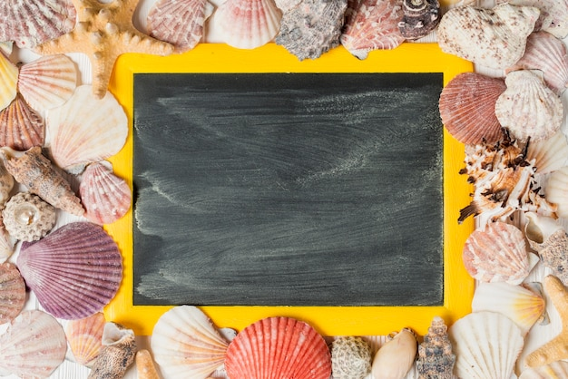 Summer concept with shells and slate