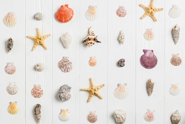 Summer concept with shells