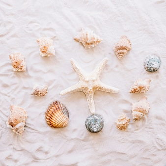 Summer concept with starfish and shells