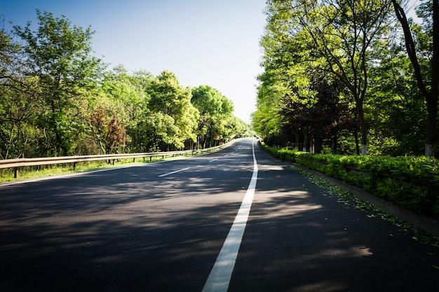 여름 시골 길