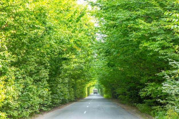 樹冠の緑のトンネルを通るアスファルト道路の夏の日。トラックで離れる