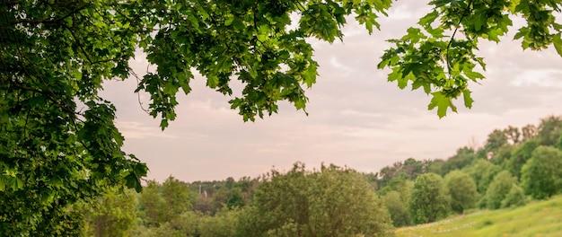 中央の夕方の空とカエデの葉が広がる夏の夜の風景