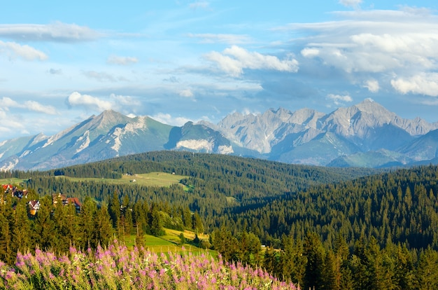 Summer evening mountain village outskirts with pink flowers in front and tatra range behind(gliczarow gorny, poland)