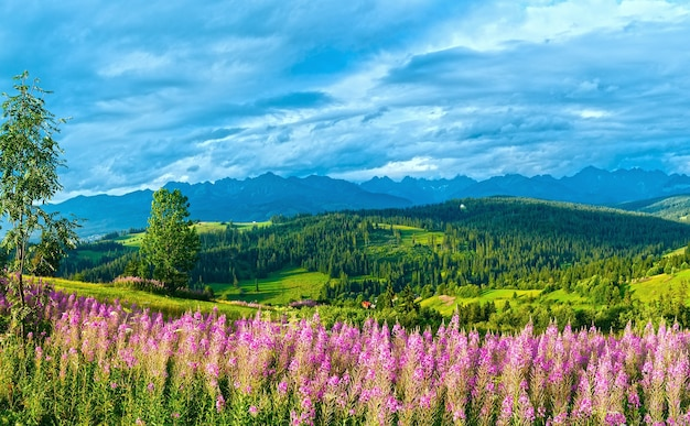 Summer evening mountain village outskirts with pink flowers in front and tatra range behind (gliczarow gorny, poland)