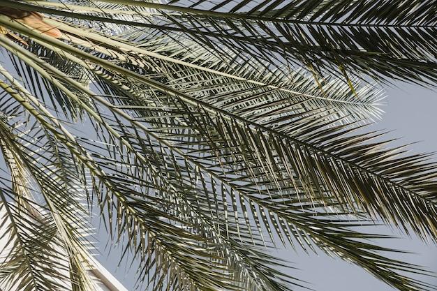 푸른 하늘에 대 한 여름 이국적인 열대 야자수 잎