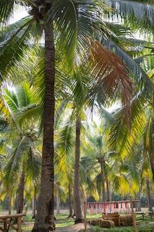 코코넛 야자의 여름 필드