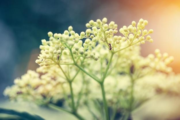 庭の夏の花。