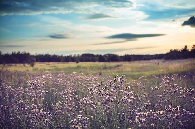 牧草地の夏の花