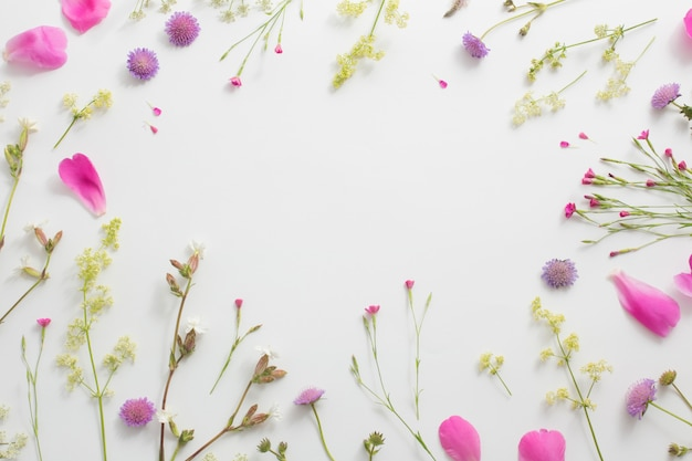 Летние цветы на фоне белой бумаги