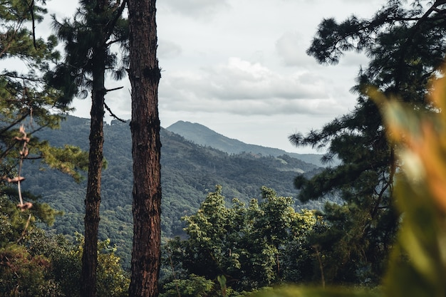 夏の森と森への道、木の苔