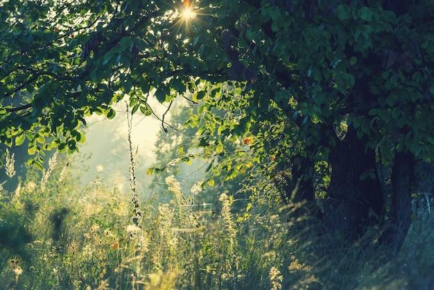 日の出時の夏の森。感動的な夏の背景。