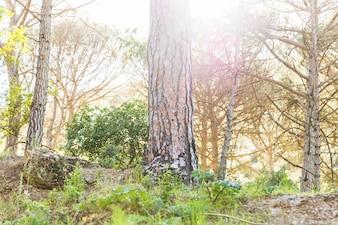 Summer forest in day sunshine