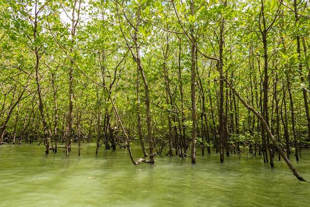 Summer forest river range landscape.