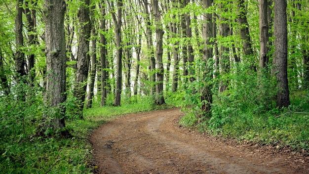夏の森。落葉樹林の土壌道路