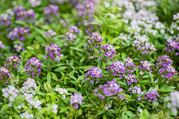 Summer garden flowers