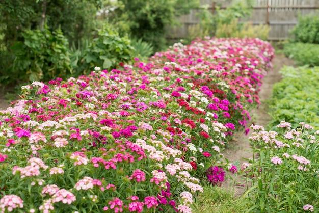 Летний сад с цветущими клумбами. красочные цветы в саду