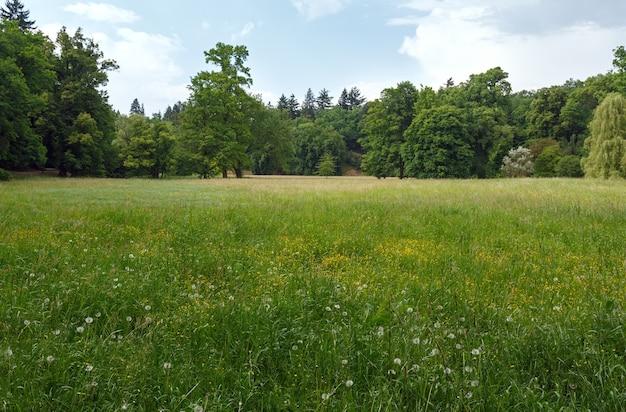 Летняя поляна с цветущими полевыми цветами