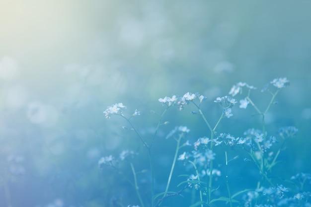 青いワスレナグサの焦点ぼけの背景と夏の空き地