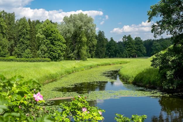 여름 녹색 시골 자연 풍경입니다. 녹색 자연 풍경입니다. 나무의 녹색 잎으로 둘러싸인 공원의 강이 있는 아름다운 다채로운 여름 봄 자연 풍경