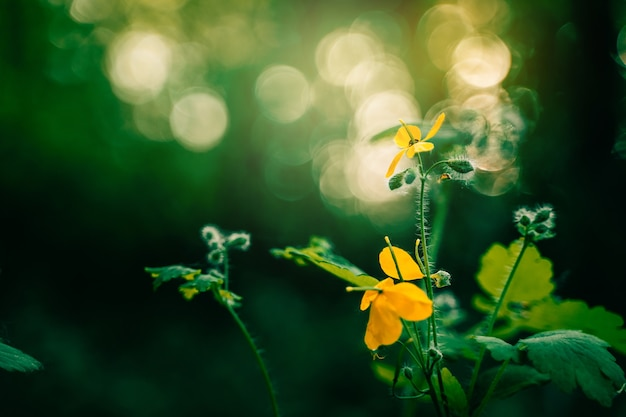 노란 꽃과 함께 숲에서 여름 녹색 어두운 배경