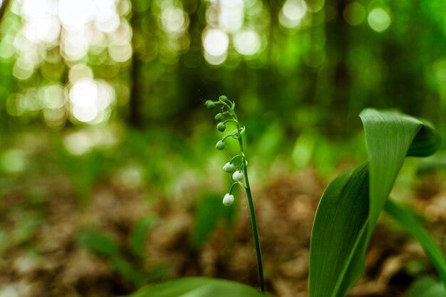 Летний зеленый темный фон с цветами колокольчики в лесу