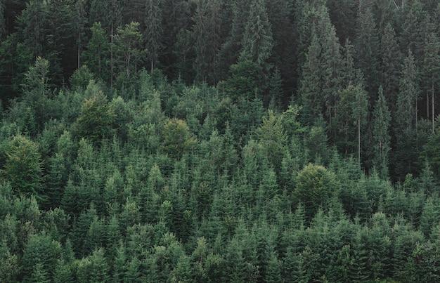 夏の緑のモミの森の風景空撮写真